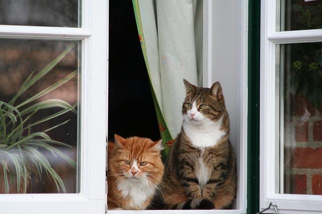 cat-437973_640